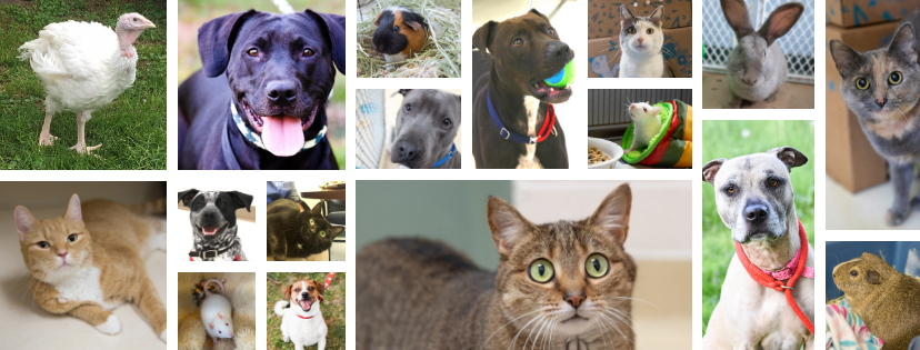 Collage of LCAS Shelter Pets