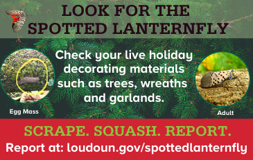 Link to information about the spotted lanternfly