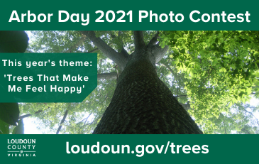 Link to information about Arbor Day Photo Contest 2021